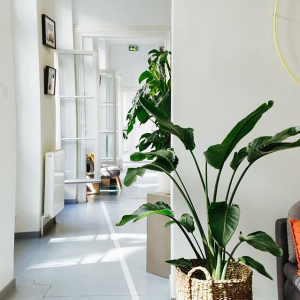 Popup appartement déco Paris chez simone lartetlafacon